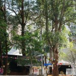 Zilda Gama realiza festa julina no Morumbi